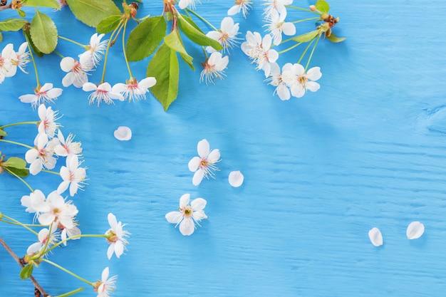 青い木製の背景に白い春の花