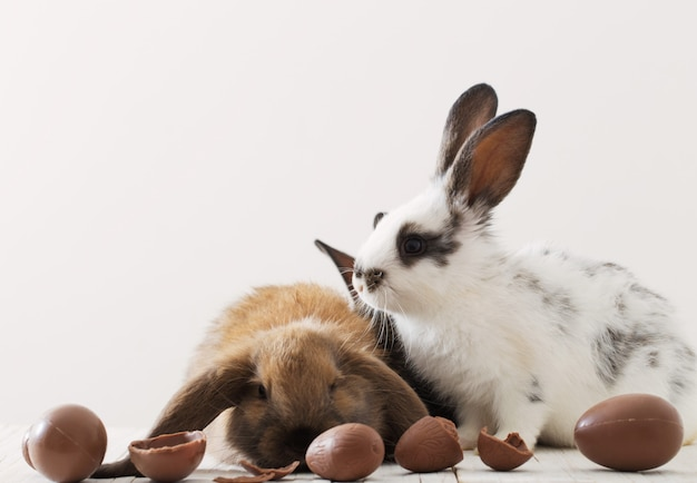 白い背景の上のチョコレートの卵とウサギ