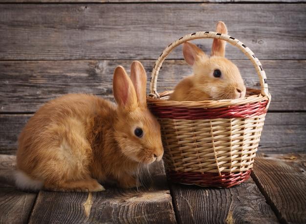 Два красных кролика на старых деревянных фоне