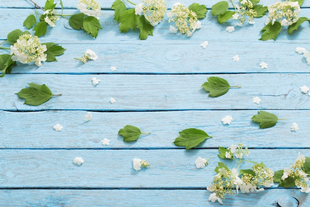 Белые цветы на синем фоне деревянных