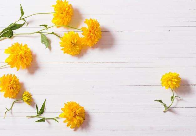 Желтые цветы на белом фоне