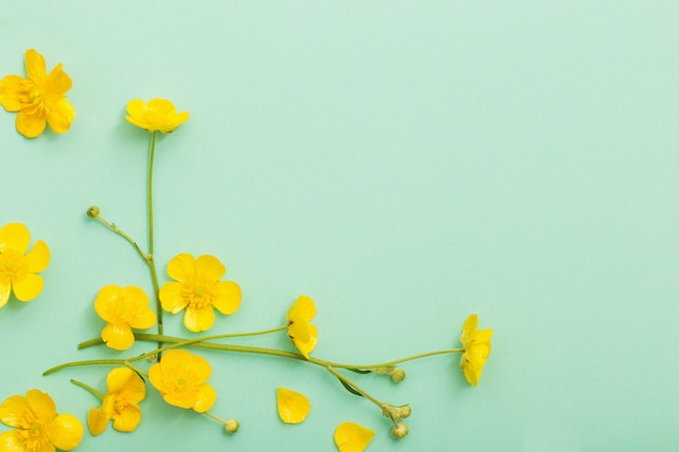 Желтые лютики на фоне зеленой бумаги