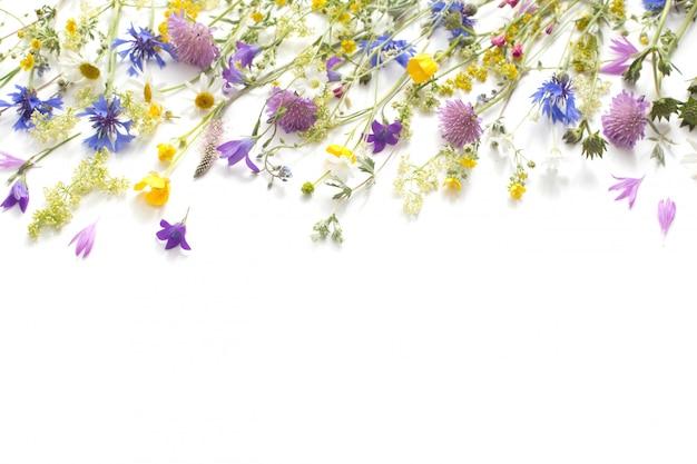 Летние цветы на белом фоне