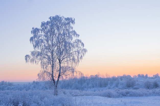 Красивый зимний пейзаж с березой