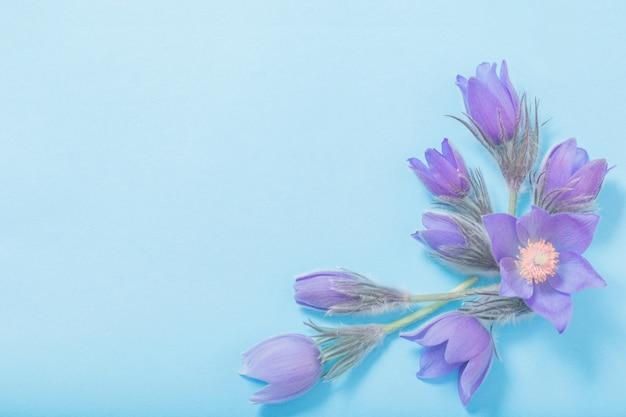 青い紙の背景に紫の花を春します。