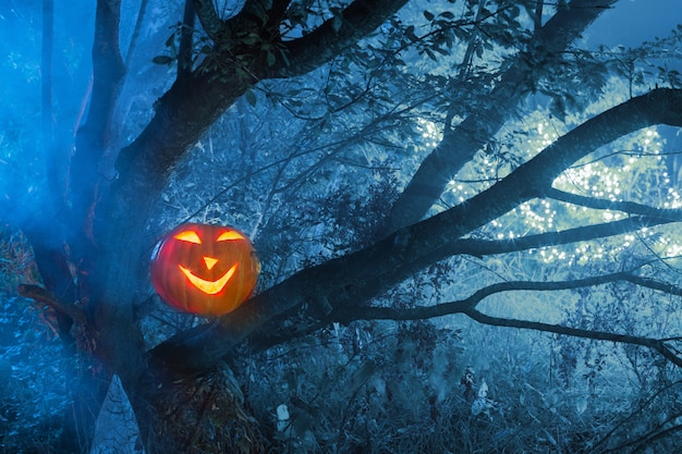 夜の森のハロウィンのカボチャ