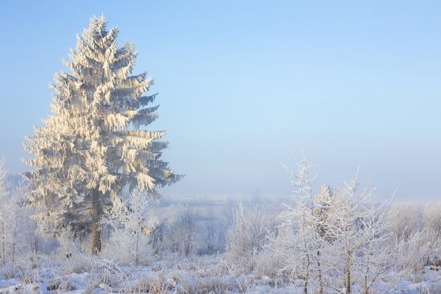 Зимний пейзаж с елью