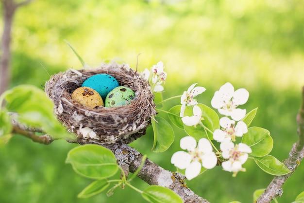 Пасхальные яйца в гнезде на открытом воздухе