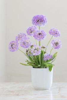 白い背景の上のセラミック花瓶のプリムローズ