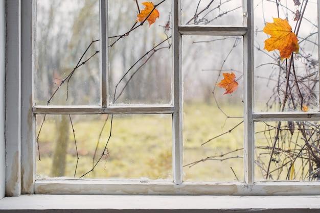 Осенний пейзаж на старом окне