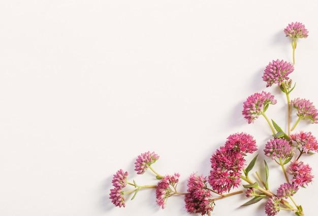 ホワイトペーパーの背景に野生の花