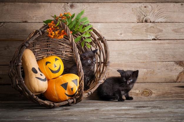 Черная кошечка с тыквами на хэллоуин