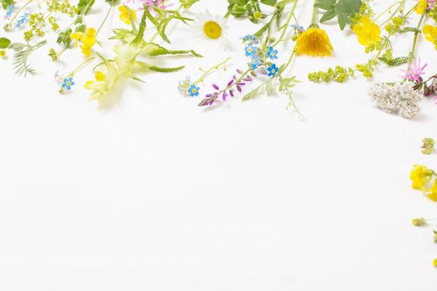 Красивые полевые цветы на белом фоне