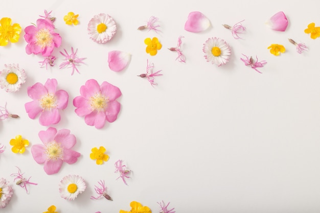 Летние цветы на белом