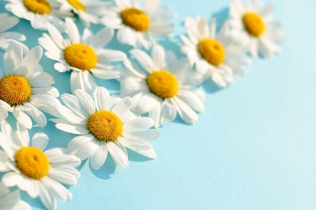 青い背景に白いカモミール。美しいデイジーパターンの花のテンプレート。春と夏の最小限のコンセプト