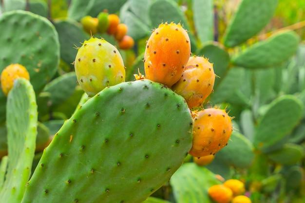 ウチワサボテンとオレンジ色の果物のクローズアップ