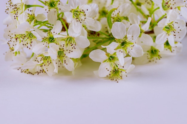 Белые цветущие цветы на белой поверхности