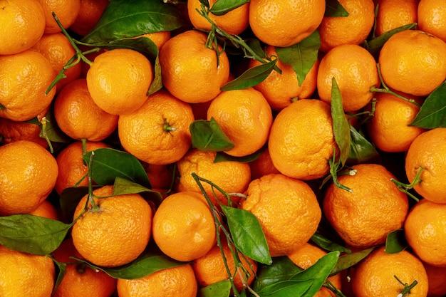 Спелые калифорнийские мандарины с зелеными листьями