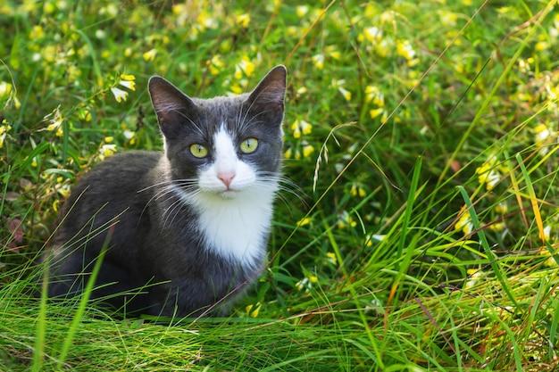 Серый кот сидит в траве на лугу. крупный план.