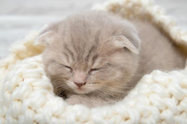 Милый рыжий котенок спит. крупный план