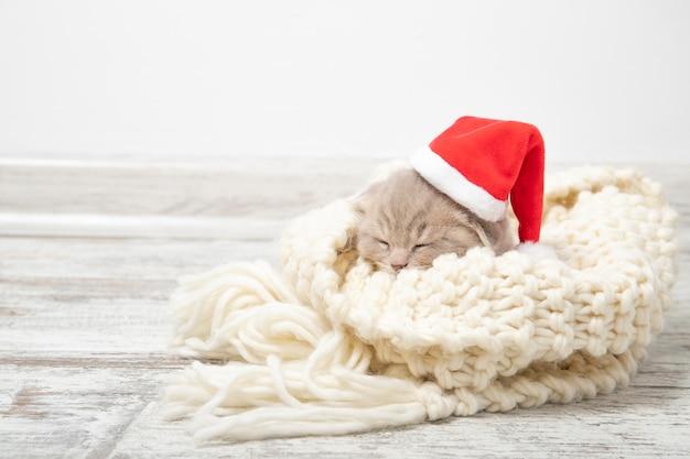 サンタ帽子の子猫。新年