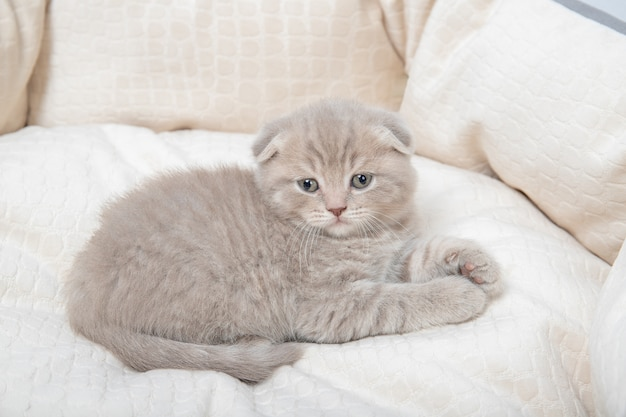 Котенок лежит в постели для кошек.