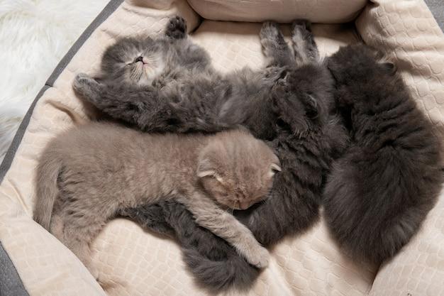 Четыре маленьких котенка спят в кошачьей кровати