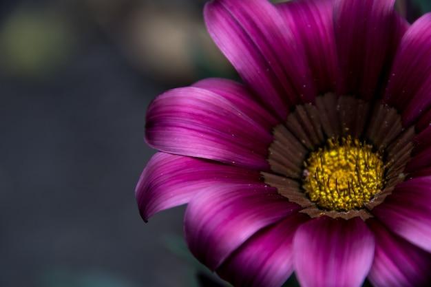 野生の自然の美しい紫色の花のクローズアップ