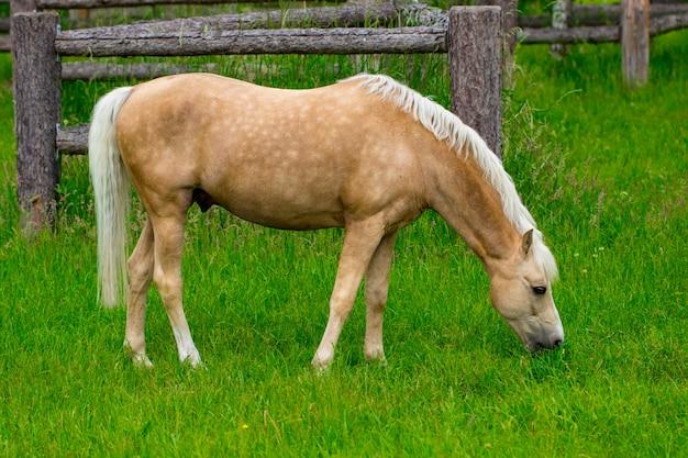 Лошадь пасется в пышном зеленом летнем пастбище
