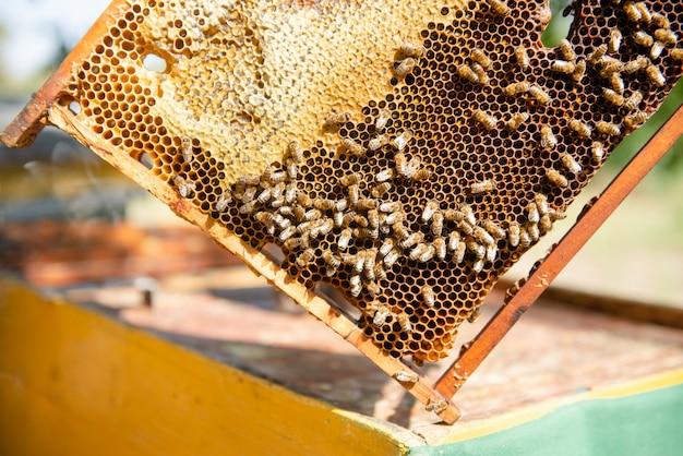 Пчеловод открывает улей, пчелы проверяют, проверяют мед. пчеловод исследует соты.