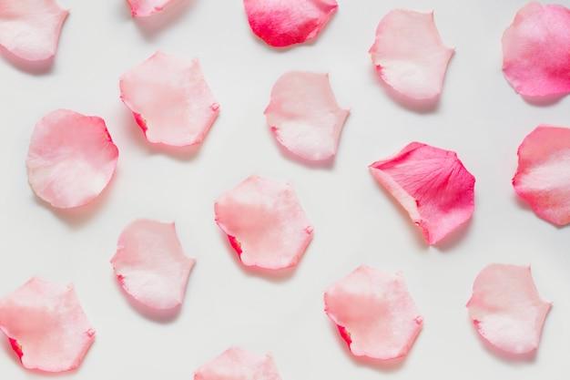 Лепестки розовые, расположены на белом фоне. концепция мягких цветочных пространств, пространств для духов и масел для нежного ароматического