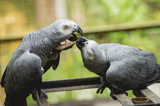 餌を求めて戦うオウム。動物園、熱帯保護区。