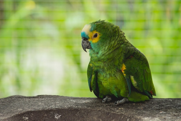 食べ物を待っているオウム。動物園、熱帯保護区