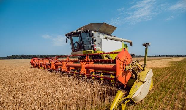 Зерноуборочный комбайн в действии на пшеничном поле.