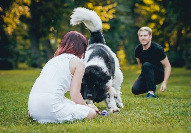 Собака ньюфаундленда играет с мужчиной и женщиной