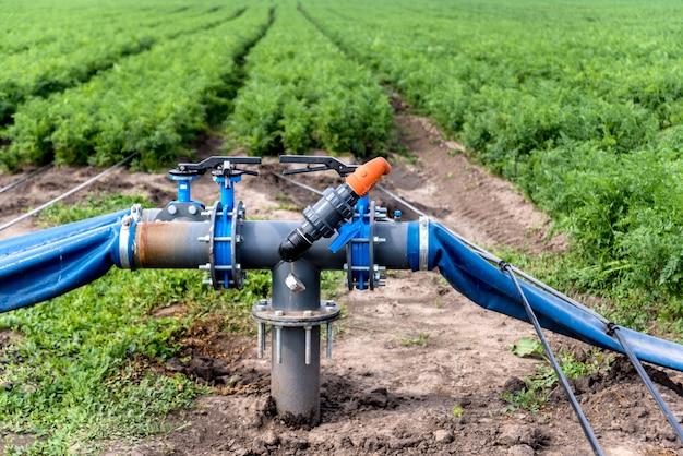 点滴灌漑システム。若いニンジン畑で使用されている節水点滴灌漑システム。