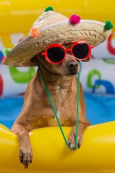 帽子と明るいインフレータブルプールのメガネの犬