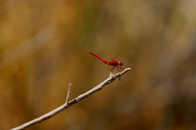 Красная стрекоза на дереве