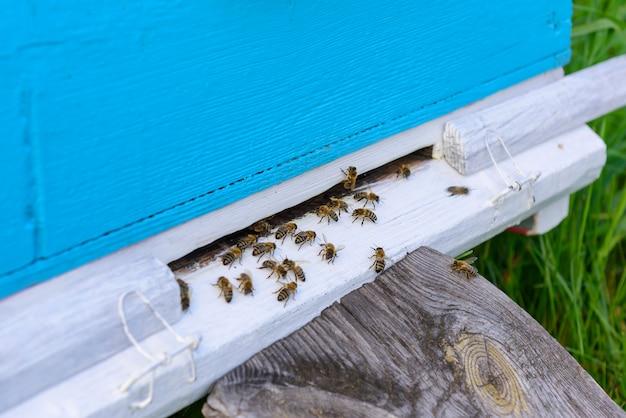 古いハイブの入り口にあるミツバチ。ミツバチは、ハチミツのコレクションから青いハイブに戻ります。木製ハイブは緑の草のクローズアップに立っています。