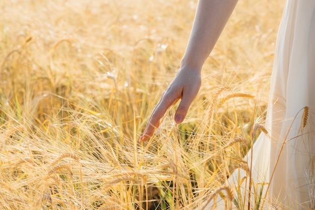 クローズアップで両手で小穂に触れる小麦の熟した畑を歩く少女。農業産業