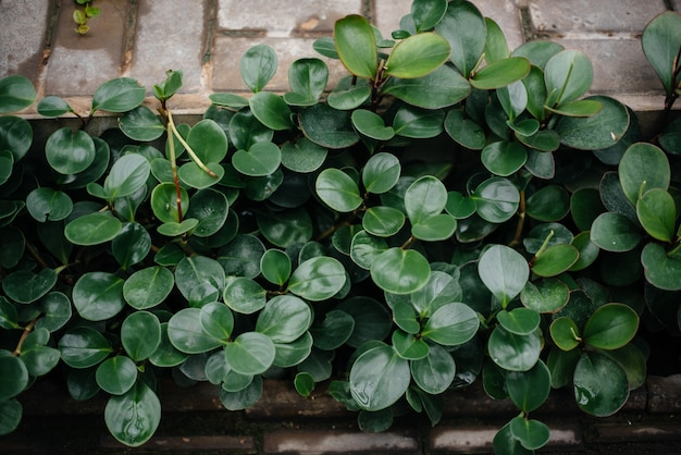 Тропическое растение заделывают в густых зарослях джунглей. тропики