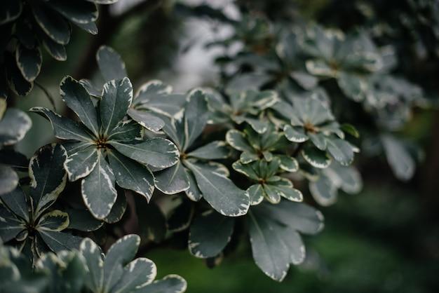 Тропическое растение заделывают в густых зарослях джунглей. тропики.