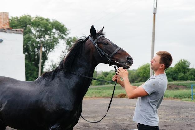 Молодой человек моет чистокровную лошадь со шлангом в летний день на ранчо. животноводство и коневодство.