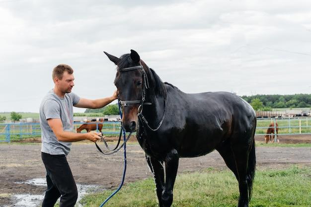 若い男が夏の日に牧場でサラブレッドの馬をホースで洗っています。畜産、および馬の繁殖。