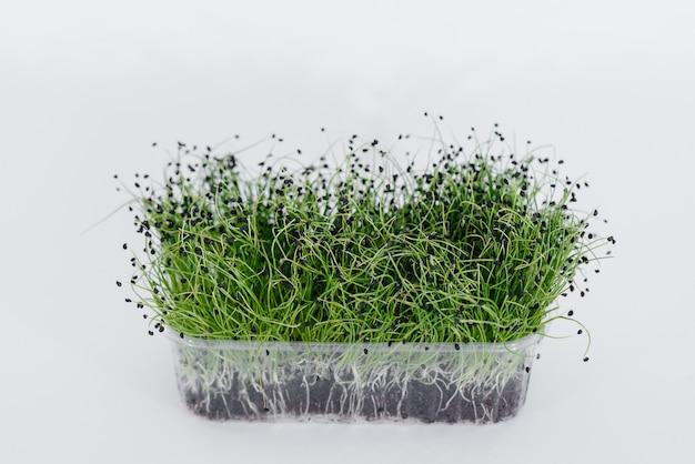 土が付いている鍋の白い表面のマイクロねぎもやしのクローズアップ。健康食品とライフスタイル。