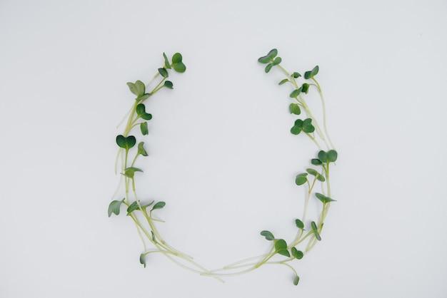 空き容量のある白い表面にマイクログリーンの芽をクローズアップ。健康食品とライフスタイル。