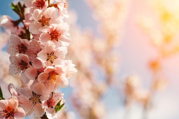 Весенние розовые цветы фоны