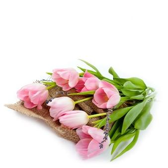 分離した白地にピンクの春の花チューリップ