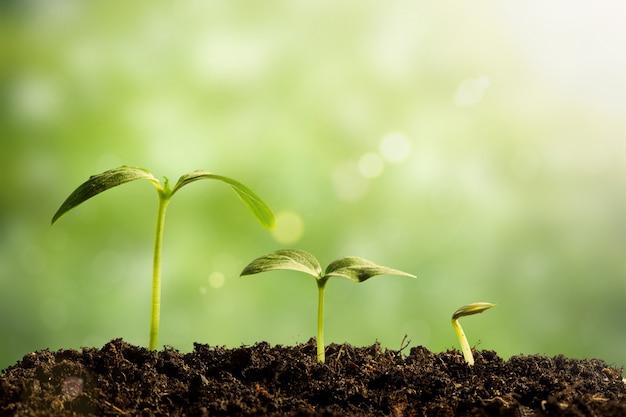 緑の苗が育つ