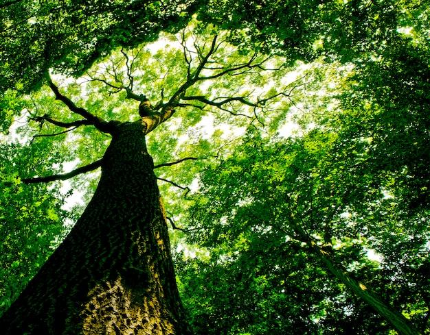 森の木。自然の緑の木の日光の背景。空